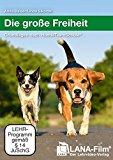Die große Freiheit: Grundlagen nach HundeTeamSchule®