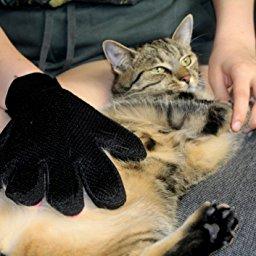 katzenhandschuh - massagehandschuh für hund und katz von talitatz